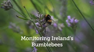 Monitoring Irelands Bumblebees