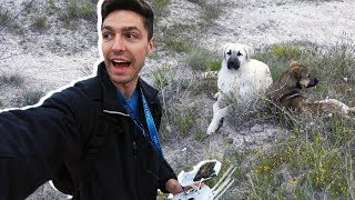 Using a Drone to Escape A Feral Dog Ambush in Cappadocia | Have Points Will Travel Moment