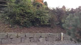 スイス発 ルツェルン近郊で子供が喜ぶアトラクション【スイス情報.com】