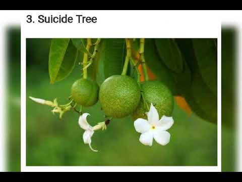 Download Poisonous plant it may causes death Mp4 HD Video and MP3