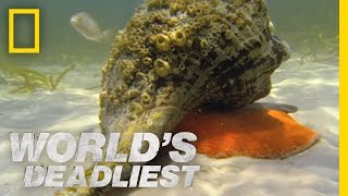 Download Youtube: Hermit Crab vs. Conch | World's Deadliest