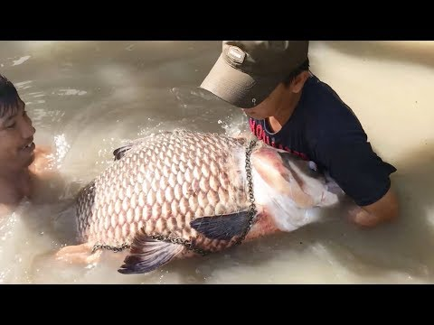 Top 5 Unbelievable Fisherman vs. River Monsters
