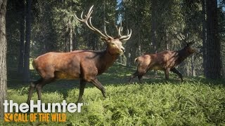 theHunter: Call of the Wild video