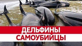 Почему ДЕЛЬФИНЫ ВЫБРАСЫВАЮТСЯ на берег? Самоубийство китов и выброс дельфинов на берег