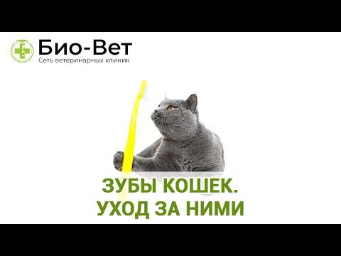 Зубы кошек. Уход за ними. Ветеринарная клиника Био-Вет.