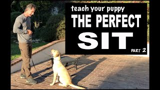 Teach Your Puppy SIT on Command - Perfect SIT - Robert Cabral Dog Training Video