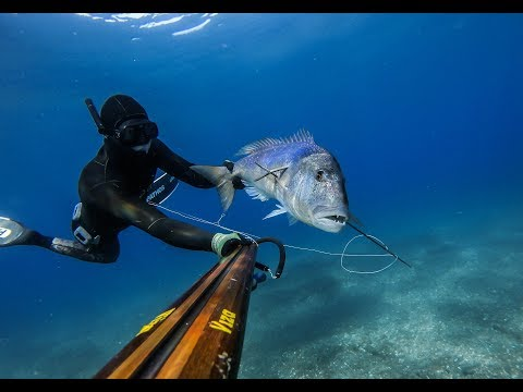 Spearfishing summer 2019