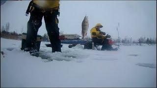 Ловля зимой окуня на финском заливе