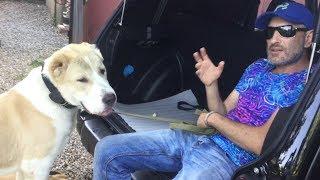 Как научить собаку прыгать в багажник(Алабай)один из способов