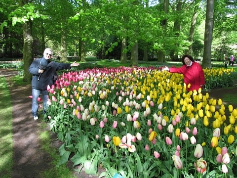 Keukenhof - Parque de Tulipanes - Holanda - 2012