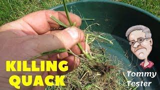 Killing Quack Grass   1 year lawn renovation review