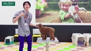 平塚動物総合医療センター 平塚市の動物病院 眼 …