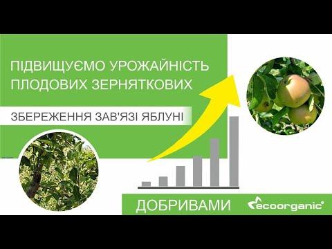 Підвищуємо урожайність плодових зерняткових (Збереження зав'язі яблуні)
