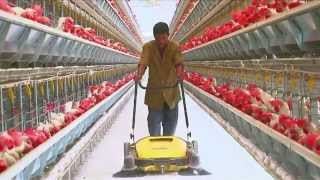 Poultry Farming   Open House Battery Cage System