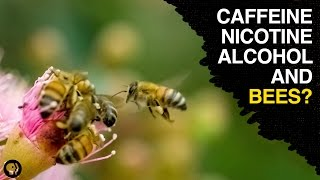 As it turns out some plant nectar contains caffeine nicotine and even