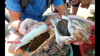 Weird Melo sea snail and scallops Vietnam recipe!
