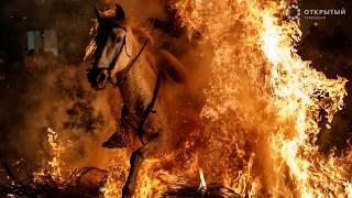 Лучшие фото недели от Reuters - видео