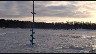 Налим в финском заливе из под льда
