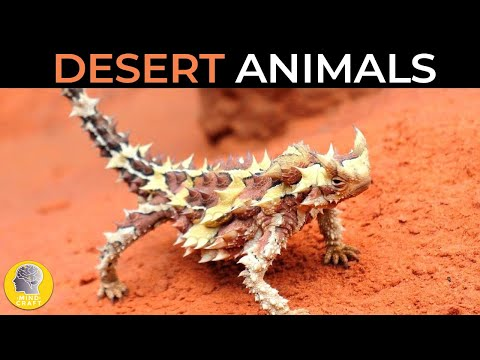 CRAZY ANIMALS LIVING IN THE DESERT!