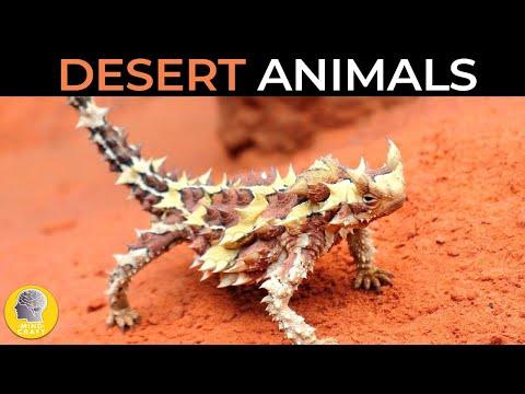 CRAZY ANIMALS LIVING IN THE DESERT!