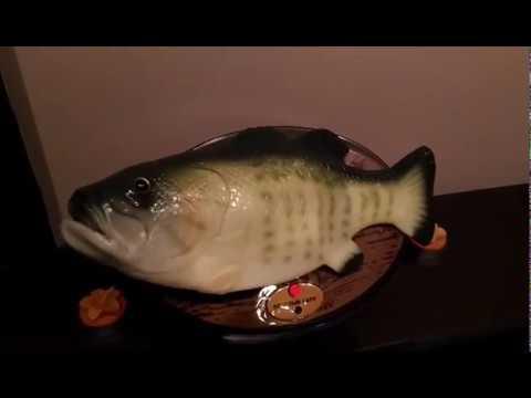 Говоряща рыба! Подарок на День рыбака