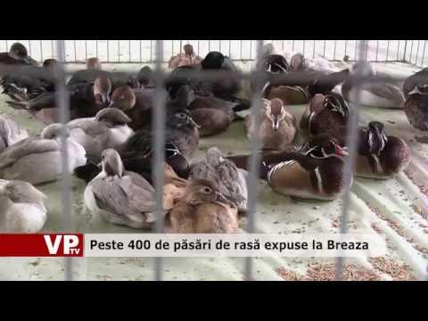 Peste 400 de păsări de rasă expuse la Breaza