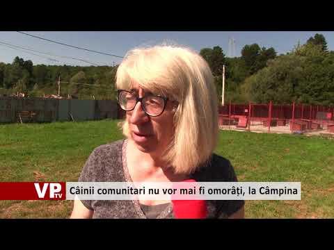 Câinii comunitari nu vor mai fi omorâți, la Câmpina