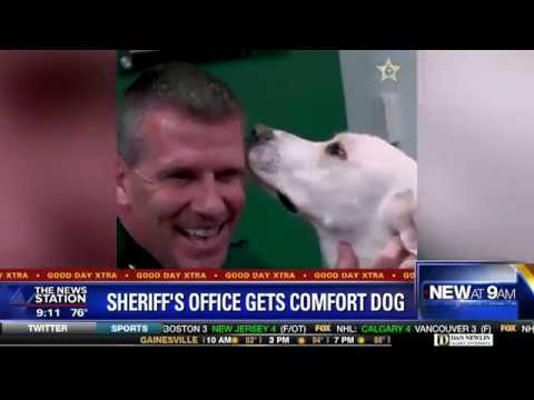 Orange County Sheriff''s Office gets first comfort dog