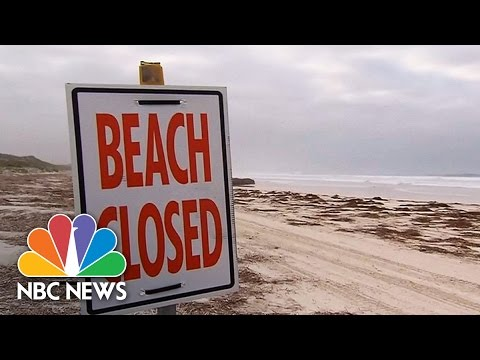 Australia Considers Shark Cull After Another Fatal Attack | NBC News