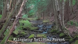 Allegheny National Forest - Morrison/Rimrock Hiking Trails - Solo Overnight