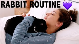 DAILY RABBIT ROUTINE / LIFE AS A PET YOUTUBER