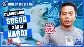 WOOFCAM: Sugod Sabay KAGAT L Chow Chow Problems