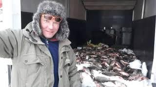 Соревнования по ловле рыбы 2020 в сургуте