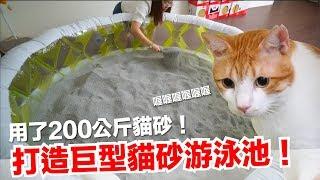 用200公斤貓砂!打造巨大貓砂游泳池!好味小姐開心新系列【傻眼貓咪】EP1