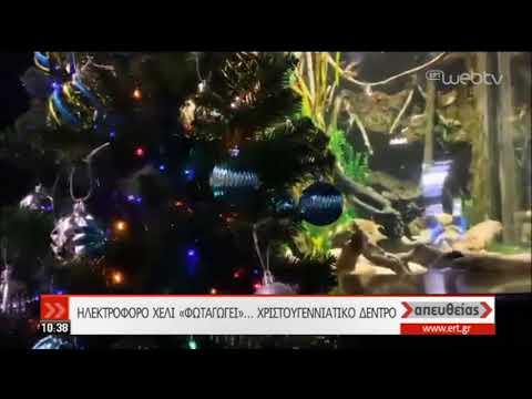 Ηλεκτροφόρο χέλι «φωταγωγεί» χριστουγεννιάτικο δέντρο! | 05/12/2019 | ΕΡΤ