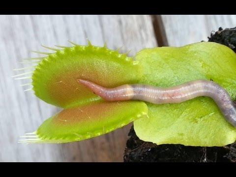 Kung paano upang linisin ang katawan ng mga bata laban sa parasites