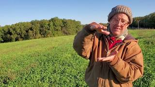 Greg Judy showing previous ragweed field that turned into lush pasture