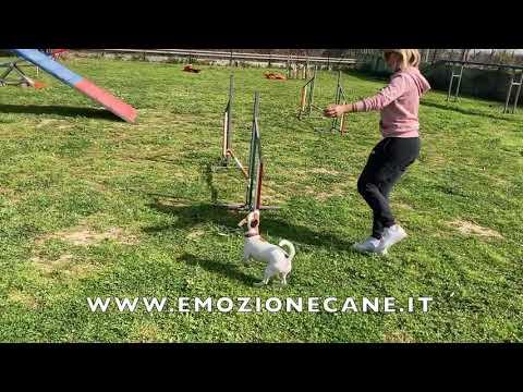 Agility Dog non agonismo solo divertimento!!!