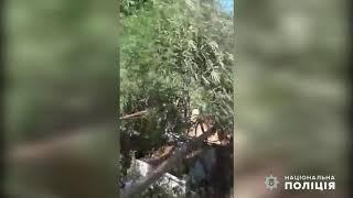 У 64-летнего жителя Николаевской области нашли коноплю, которую он растил «для себя». Видео