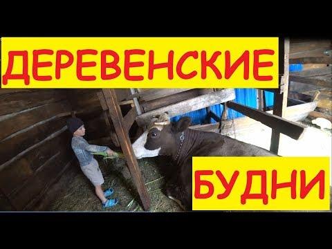 Деревенские будни / Созрела кукуруза / Заказали гуся / А к бабе Тане поедем?