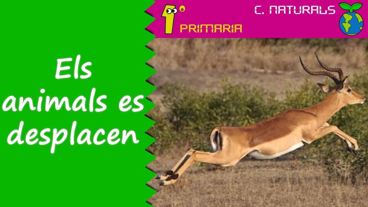 Ciències de la Naturalesa. 1r Primaria. Tema 5: Els animals es desplacen