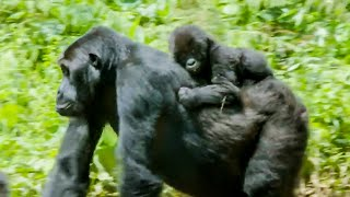 Top 5 Times Nature Won | BBC Earth