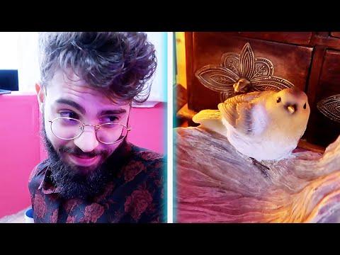 Foto gay e bestialità