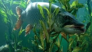 Схему электронной приманки для рыбы