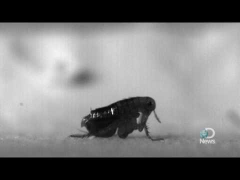 Snail parasites lahat ng mga uri ng mga larawan at mga pangalan