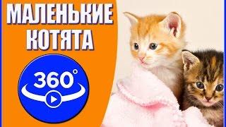 Маленькие котята. Видео 360 градусов.