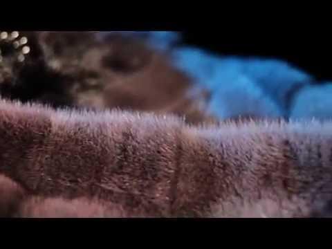 Видео талисман ютуб