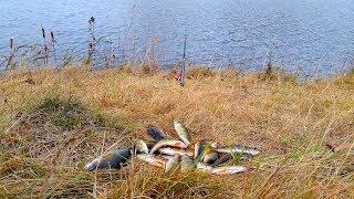 Ловля щуки и окуня на живца осенью