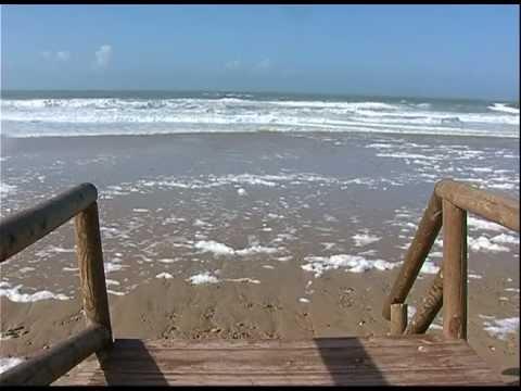 Detectan la presencia de medusas tóxicas en la playa de Camposoto