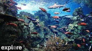 Webcam Live Tropical Reef Camera Palau